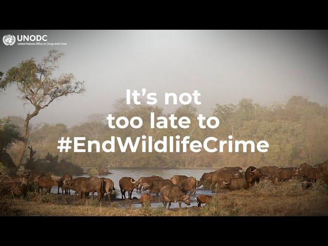 World Wildlife Crime Report 2020