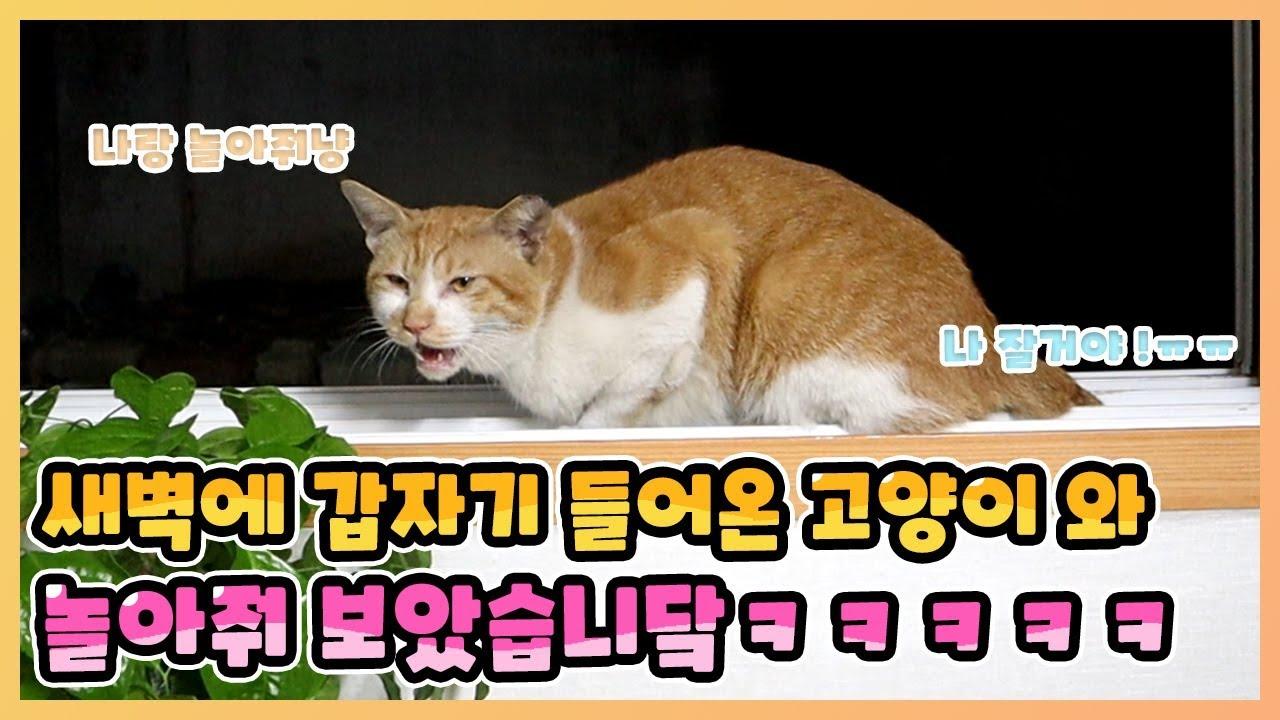 새벽에 갑자기 들어온 고양이와 놀아줘보았습니다 ㅋㅋㅋㅋㅋㅋ(리뷰하는 유튜버 규TV)