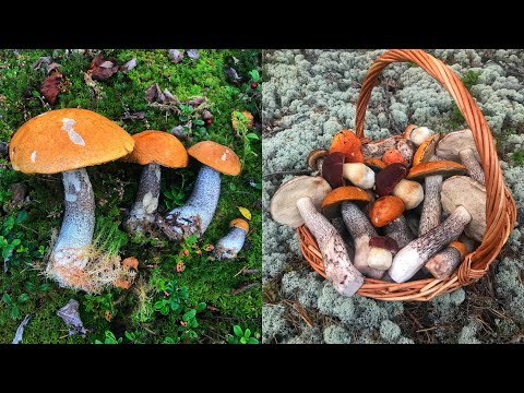 Вопрос: Почему некоторые грибы могут жить только вблизи деревьев?