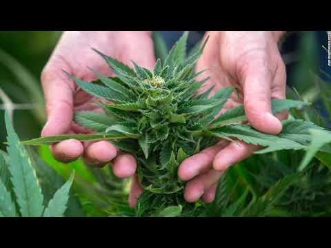 Care Marihuana Could Assist Resolve The Opiate Plague, Dr. Sanjay Gupta Tells Jeff Sessions