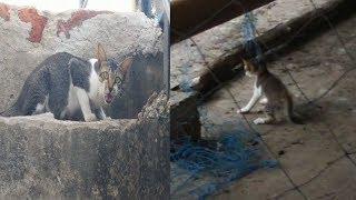 Mom cat asking for help ! Notorious Kitten's neck stuck in net ! #drtusarofficial