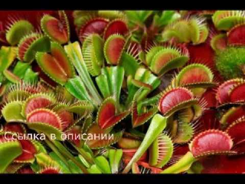 Заказ почтой цветов прямые доставки цветов из голландии
