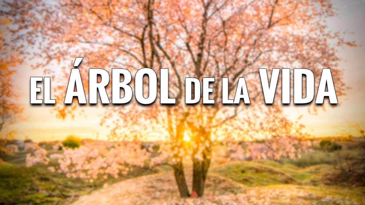 El ÁRBOL de la VIDA - YouTube