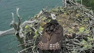 Audubon Osprey Nest Cam 06-18-2018 11:09:39 - 11:59:26