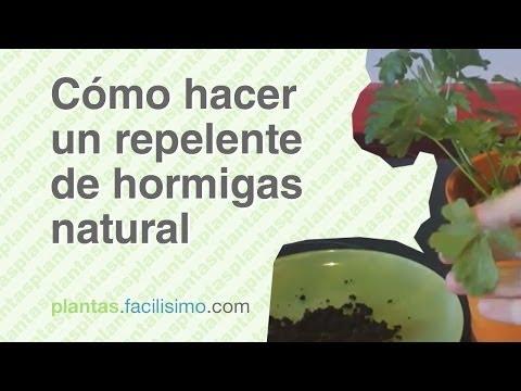 Como eliminar las hormigas con remedios caseros como for Como eliminar plaga de hormigas