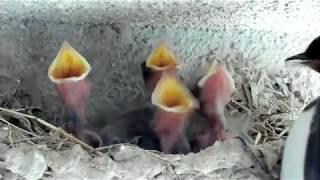 2018/06/08 孵りました!全羽孵化してるかは確認できてません。 今年2...