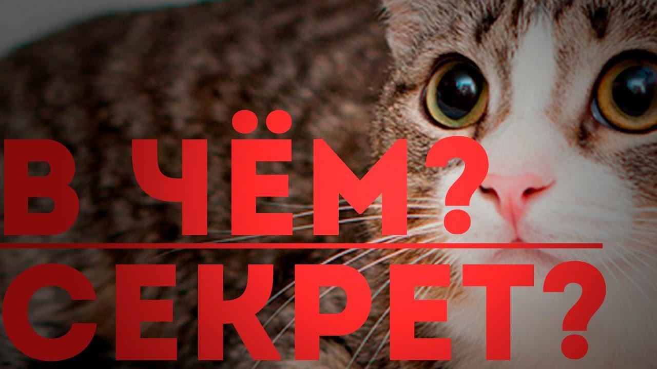 Песня кота бориса