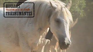 CABALLOS TRASHUMANTES DE LOS PIRINEOS. La Vall Fosca