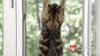 видео Москитные сетки на балкон для кошек