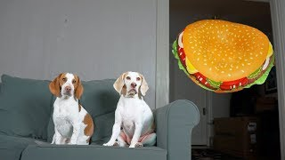 Dogs vs. Giant Cheeseburger Prank: Funny Dogs Maymo & Potpie