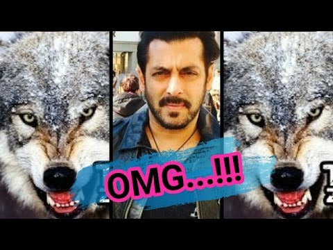 Salman Khan Fighting With Wolves|Tiger Zinda Hai Official Trailer|Action Scene|Real Fight|2017