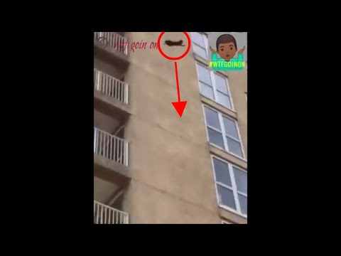 CRAZY! Daring Raccoon jumps from an extremely high building after climbing