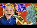 THERE'S A SNAKE IN OUR HOUSE! DINGLE HOPPERZ MAGIC WATER TREE! AVOCADO BABY AUSTIN! VLOG