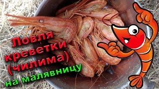 Ловля морской креветки (чилима). Лайфхак. Отдых на море.(Ловля морской креветки (чилима) на малявницу, в качестве приманке использована тухлая рыба. Проводим отдых..., 2016-08-19T00:23:57.000Z)