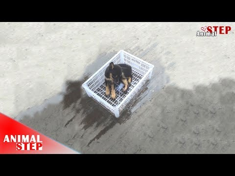 Stray Puppy Drown in Fuel