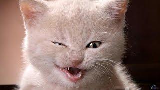 Приколы про котов.  Коты танцуют.
