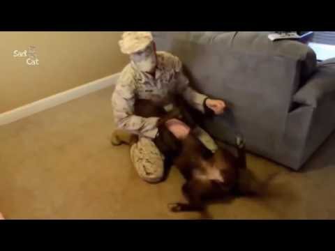 Trending Dogs Welcoming Soldiers Home Compilation NEW