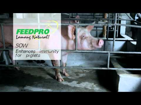 FeedPro AVP