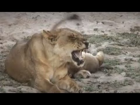 2001 Zambia   Malawi  safari