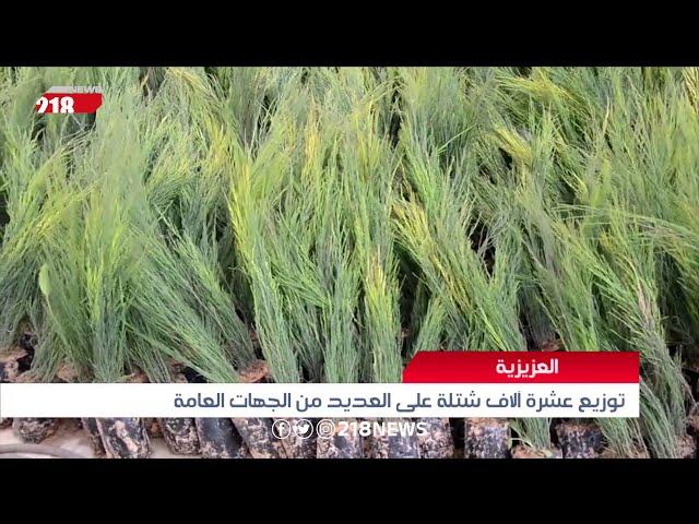 حملة لتعزيز الغطاء النباتي في العزيزية بغرس 10 آلاف شتلة | ليبيا اليوم