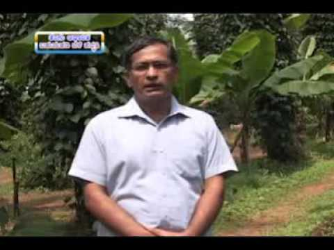 6 11 15 coconut based multistoried cropping system dr m ravibhatt and ipm in safflower dr r r patil