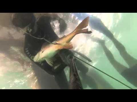 Chasse sous-marine Gabon