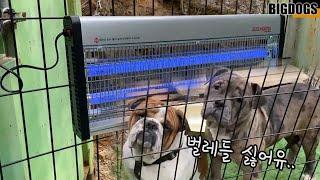 강아지들 사는 시골마당에 모기 나방들을 위한(?) 포충…