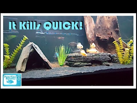 How To Lower Ammonia In An Aquarium