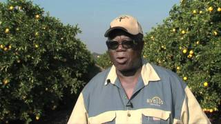 Farming entrepreneurs: Citrus farming