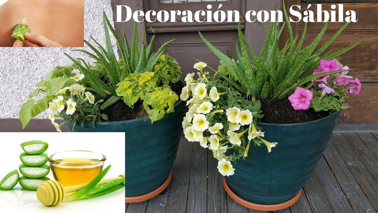 arreglos florales con plantas de s bila aloe vera youtube. Black Bedroom Furniture Sets. Home Design Ideas