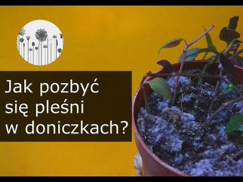Pleśń w ziemi u roślin domowych. 6 sposobów jak pozbyć się pleśni z ziemi