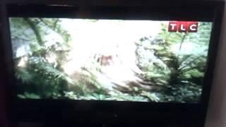 tanda comercial TLC discovery latinoamerica(20-10-2013)