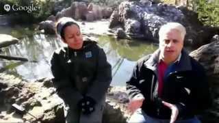 Hangout with the Bronx Zoo Penguins via Google Glass thumbnail