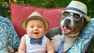 Pit Bull And Baby Compilation