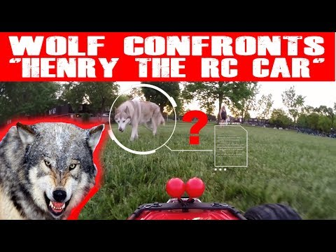 "WOLF CONFRONTS ""HENRY THE RC CAR""? (EPISODE #97)"