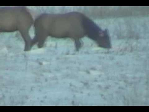 Kittson County Minnesota Wildlife