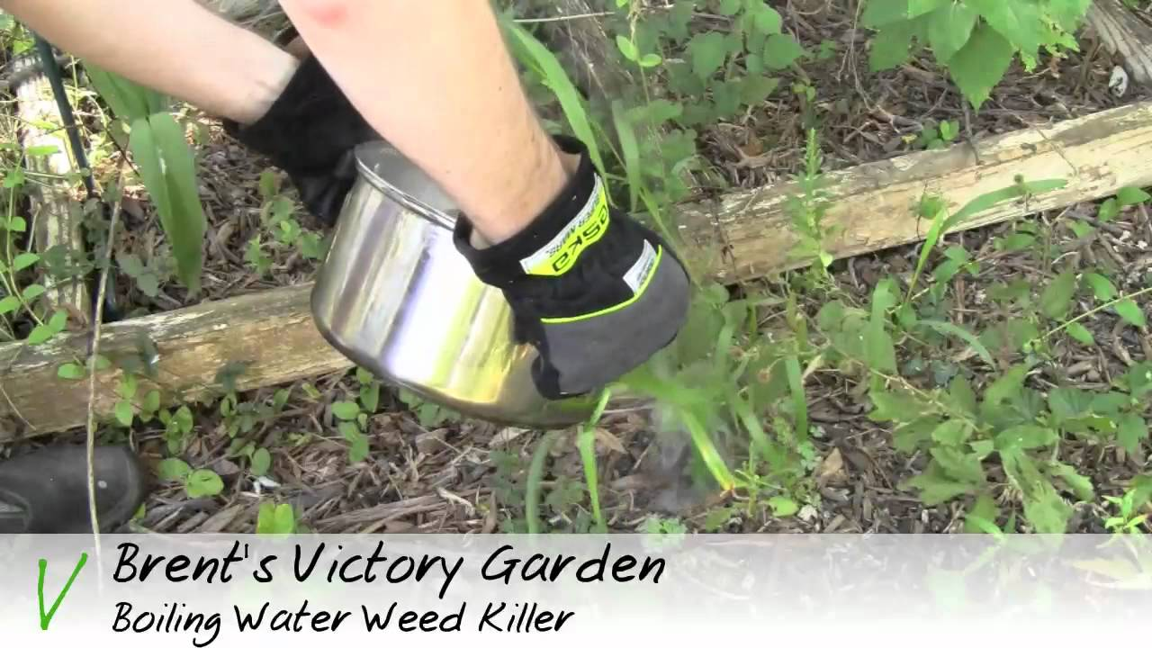 Homemade Natural Organic Weed Killers That Won't Kill Your Flowers