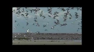 Born to Travel - Protecting Migratory Birds