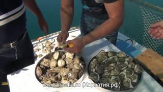 Устрицы в Хорватии (с Кристаллом)