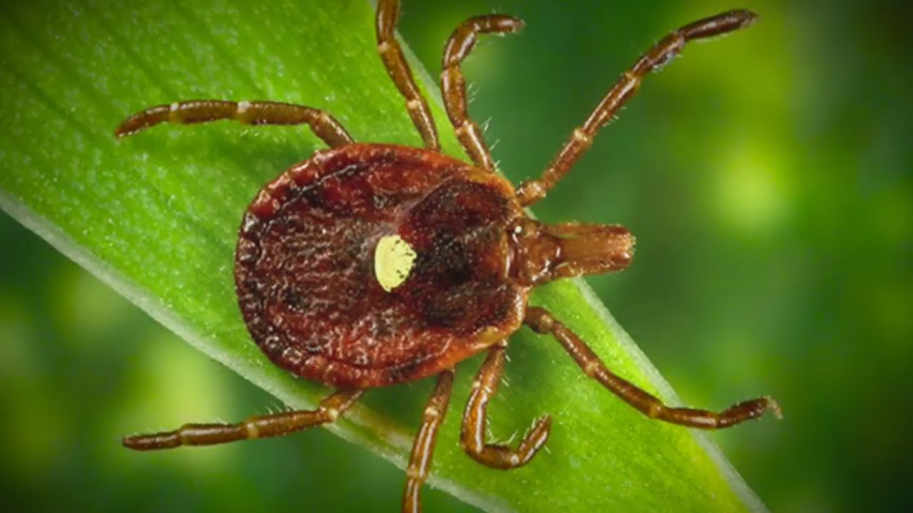 Good Question: What's Good About Ticks?