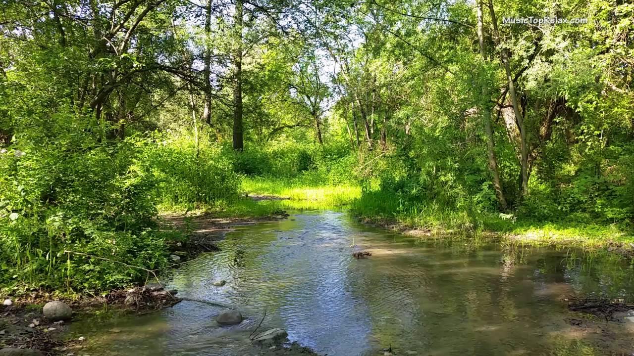Звуки природы, пение птиц, Звуки Леса, для релаксации, сна, Медитации, Relax 8 часов