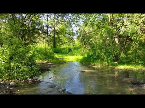 Sounds of nature, birds singing, Sounds of Forests, for relaxation, sleep, Meditation, Relax 8 hours