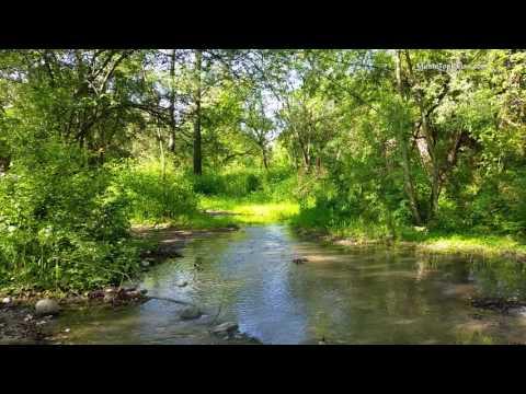 Звуки природы, пение птиц, Звуки Леса, для релаксации, сна, Медитации, Relax 8 часов - Видео онлайн