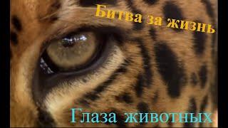 Битва за жизнь #Глаза животных