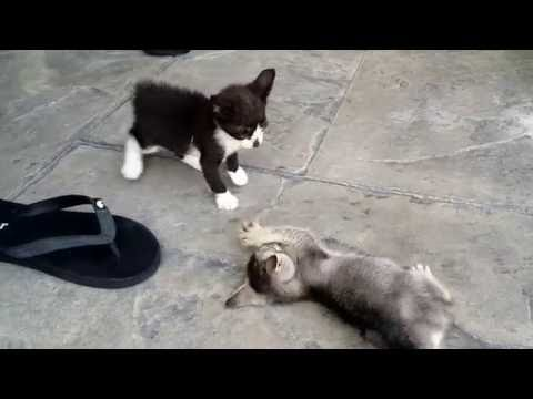 Anak Kucing Mati Doovi