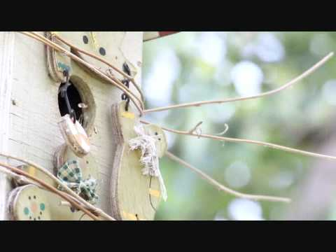 Fledging House Wrens Getting Ready To Fly,