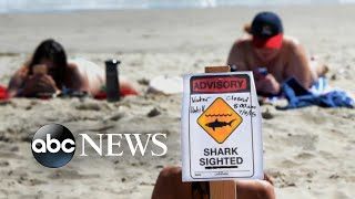 Young girl attacked by shark in shallow water