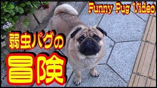 お勧め動画【パグの家族? Pug's Family】 → https://youtu.be/W1FdVY1N0...