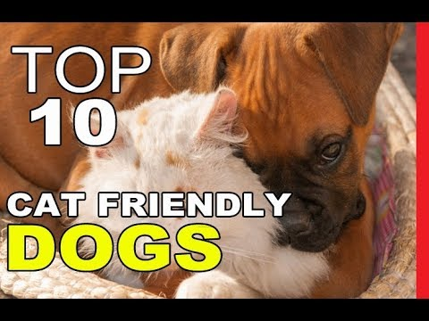 Top 10 Most Cat Friendly Dog Breeds