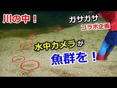 川でガサガサ!水中カメラが魚群を!【夏休みコラボ】